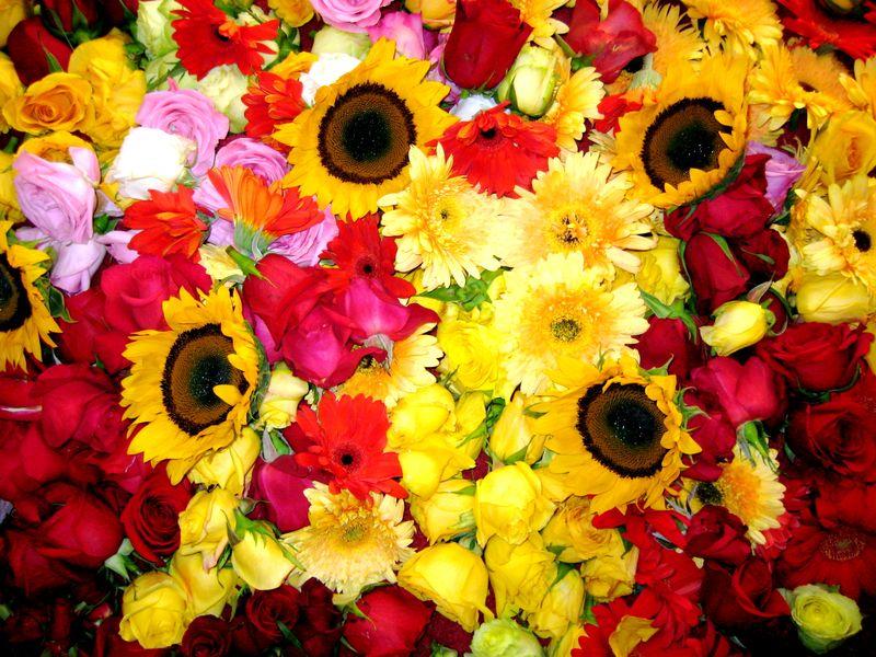 Sundari flowers