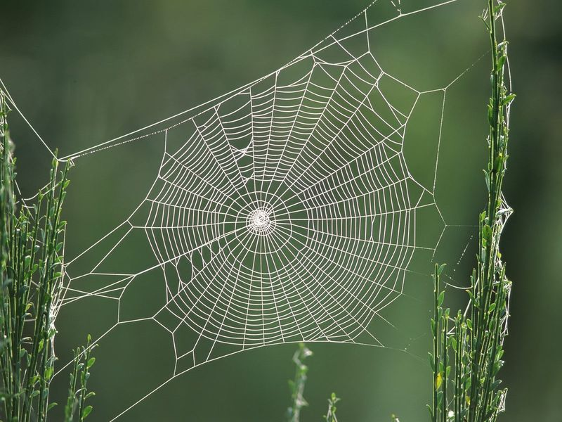 Spider_Web_windows_7_wallpapers